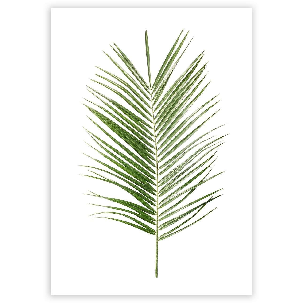 Poster Palm Leaf Green