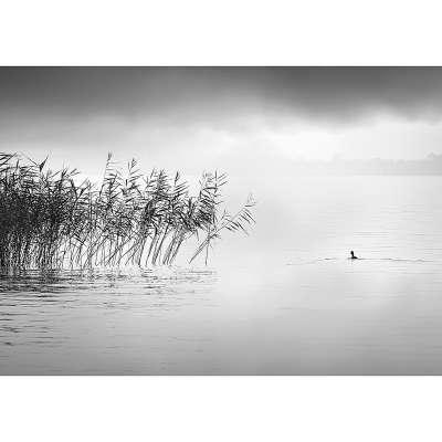 Obraz na plátně By the Lake II